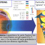 Lipoproteine e note varie sulle dislipidemie